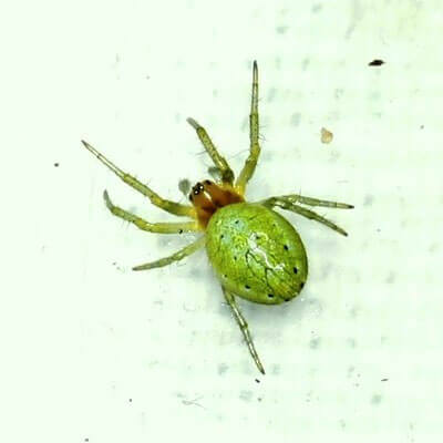 Spindlar Du Traffar Pa I Din Tradgard Natur Tradgard