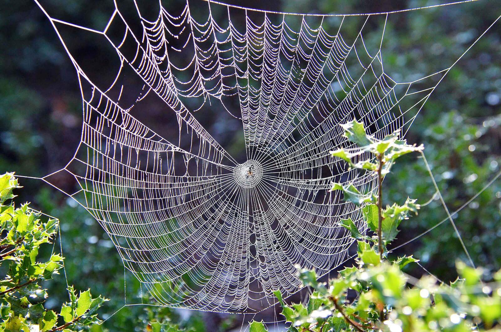Spindeln – jägaren som skyddar din trädgård | Natur & Trädgård